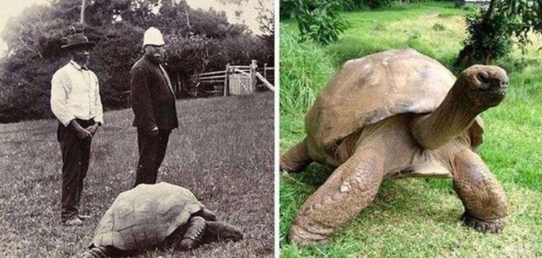 Жонатан нэртэй яст мэлхий 1832 онд төрсөн бөгөөд одоог хүртэл амьд байгаа юм