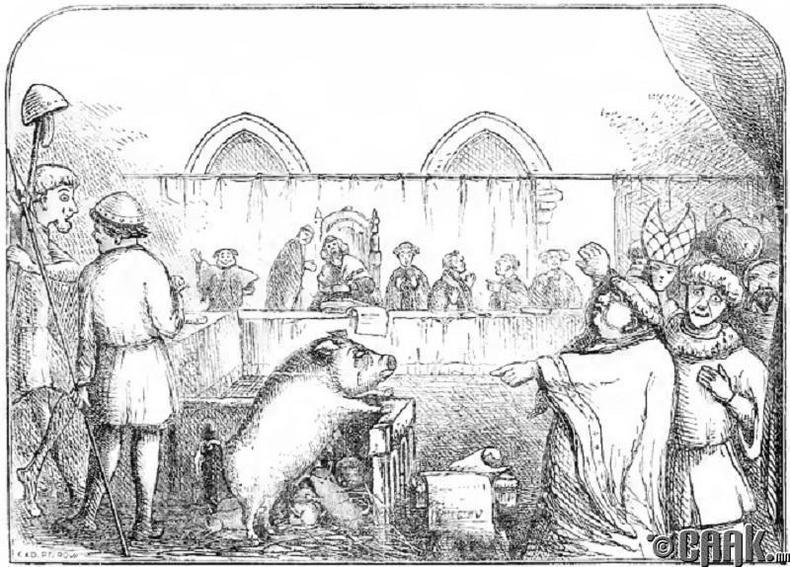 Амьтны шүүх хурал
