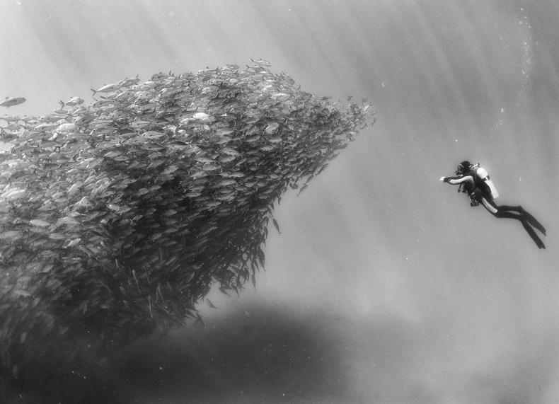 Мексик гэрэл зурагчны далайн гүнд ажилласан фото тэмдэглэл