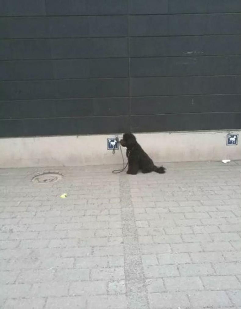 """Дэлгүүрт орохын өмнө нохойгоо """"зогсоолд"""" нь тавих хэрэгтэй"""
