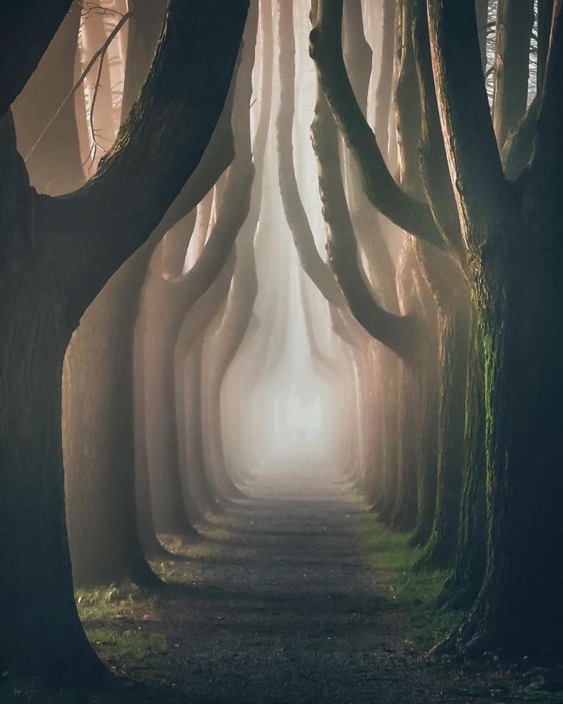 Италийн Луччад байдаг модот гудамж