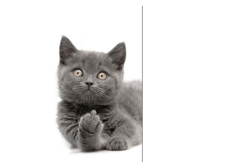 Муур - амиа хичээгчид