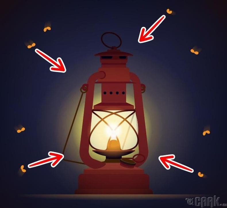 Цагаан эрвээхий яагаад гэрэлд татагддаг вэ?