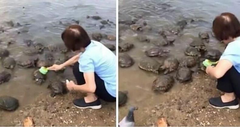 Замгаа цэвэрлүүлж буй яст мэлхийнүүд