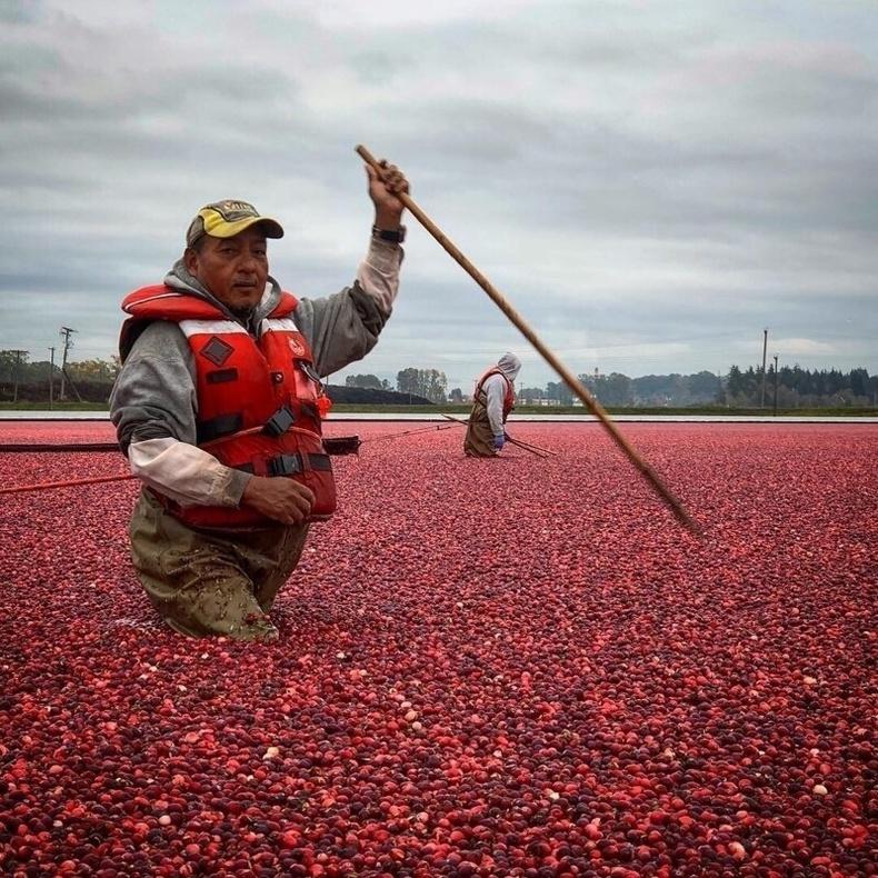 Цангис жимс хурааж буй нь, Канад