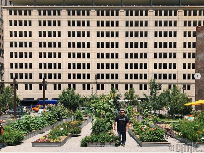 Детройт хотын төвд төрөл бүрийн ногоо тариалж байна