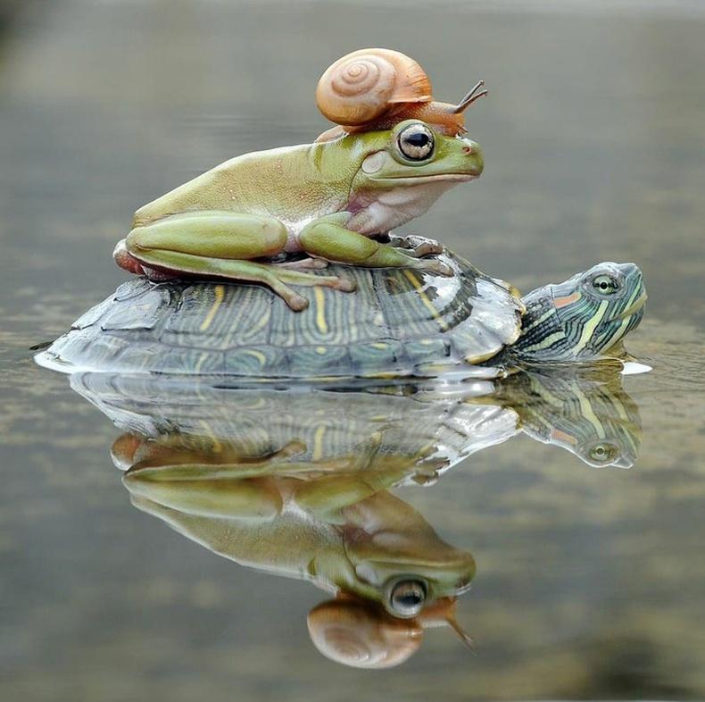 Амьтны ертөнц дэх тээврийн үйлчилгээ