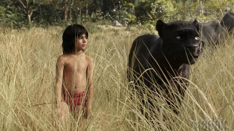 Маугли хүмүүсийн ертөнцөд амьдарч чадаагүй