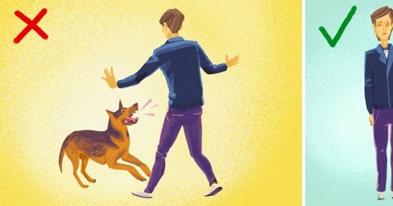 Хэрвээ тань руу нохой дайрвал юу хийх ёстой вэ?