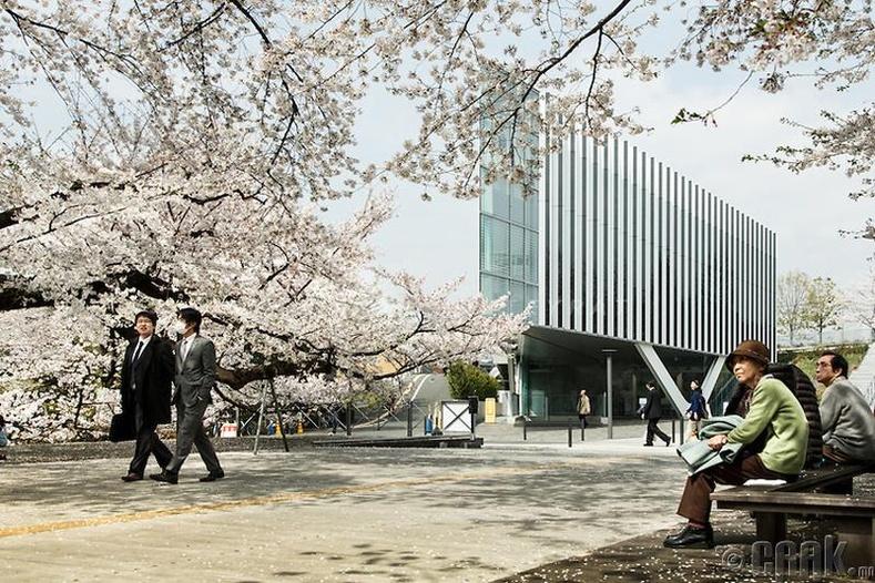 Токиогийн Технологийн Сургууль (Tokyo Institute Of Technology)
