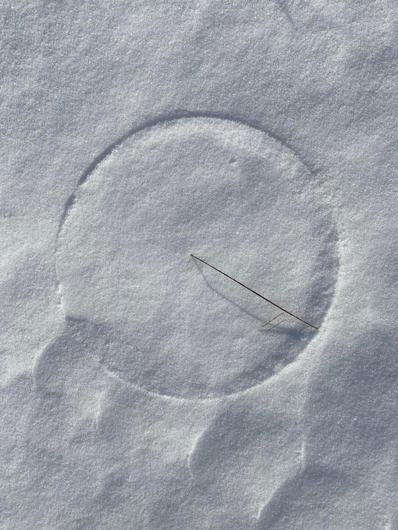 Салхинд найгасан ганц өвс цасан дээр төгс тойрог зуржээ