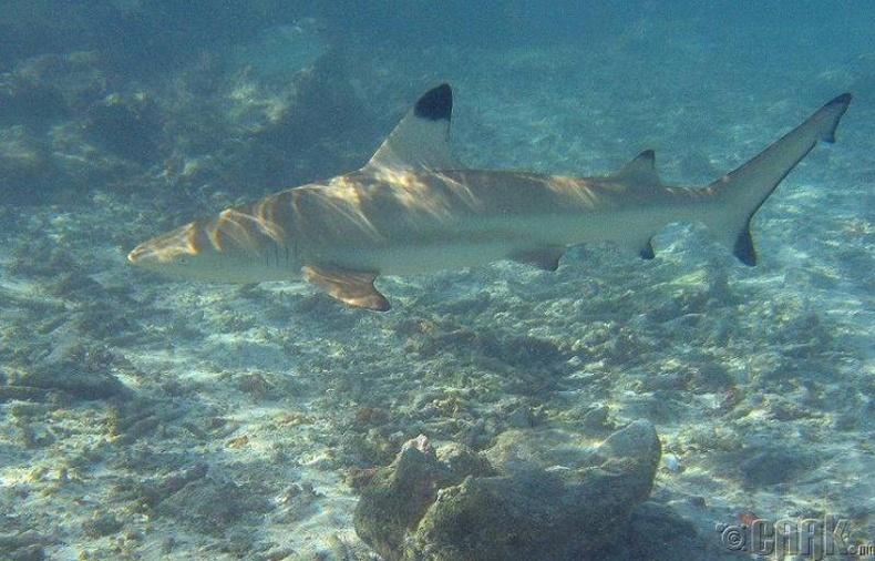 Махчин загаснууд далайн амьтдын тэнцэрт байдлыг хангадаг