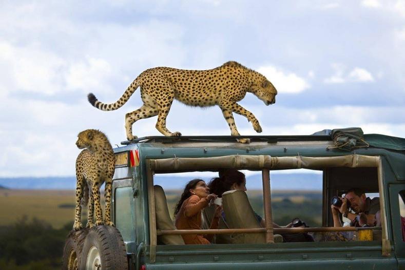 """""""National Geographic""""-ийн шилдгийн шилдэг бүтээлүүд"""