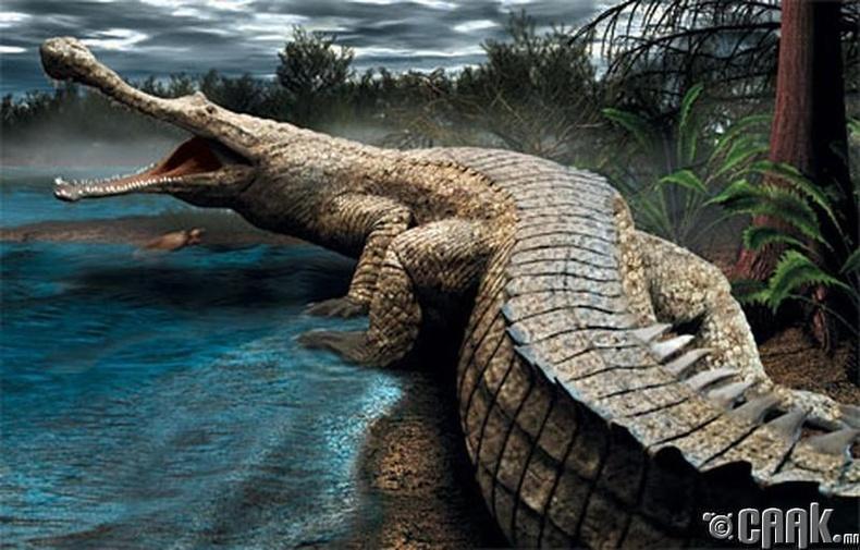 Аварга матар (Саркозух, Sarcosuchus imperator)