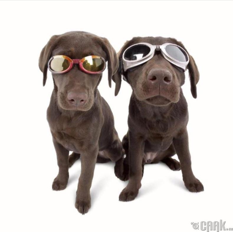 Рони Ди Лулло - Нохойны нүдний шил