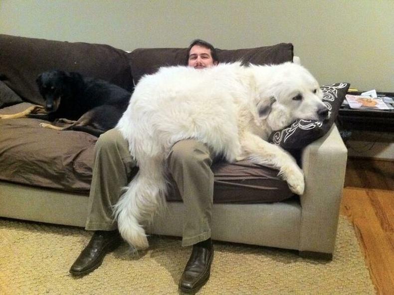 """""""Нохой нэртэй эрх цагаан баавгай."""""""