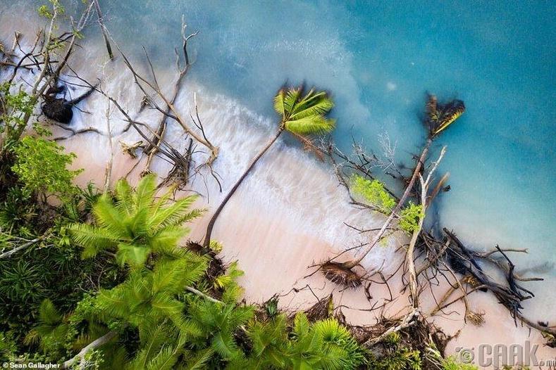 """""""Орчны өөрчлөлт"""" төрлийн ялагч - Гэрэл зурагчин Шон Каллахер, Тувалугийн арлууд дээрх унасан дал модод"""