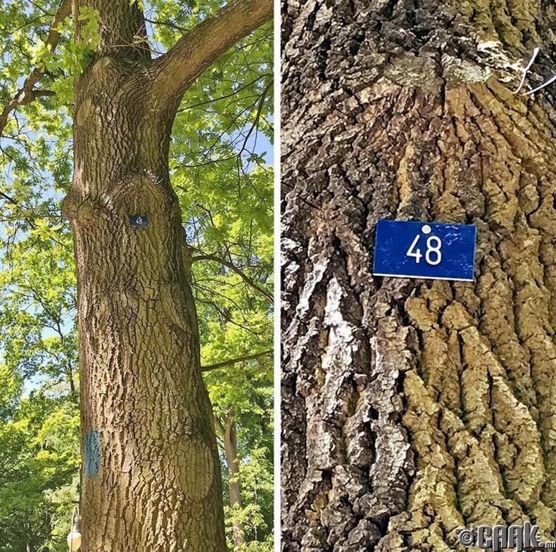 Германд модыг дугаарладаг
