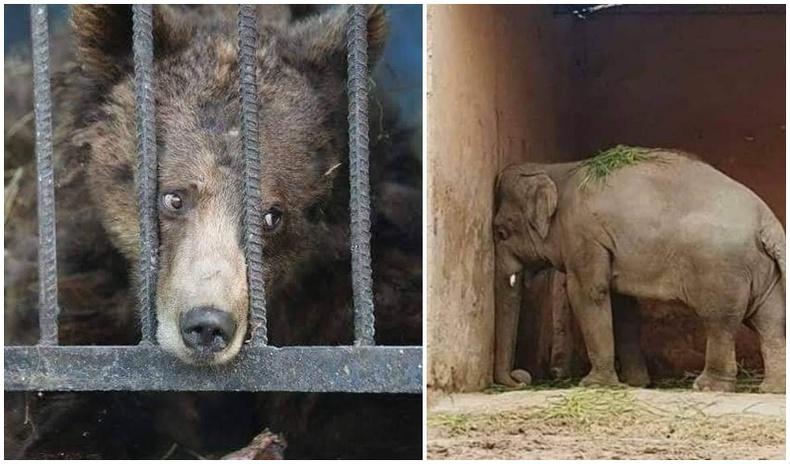 """""""Гэмгүй хоригдлуудын шорон"""" - Амьтны хүрээлэнгийн амьтдын сэтгэл эмтрэм төрх"""