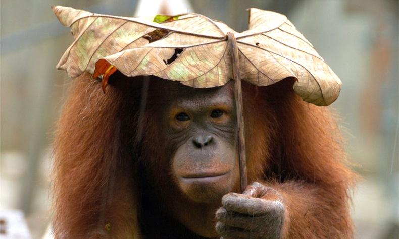 Борооноос хорогдсон амьтад