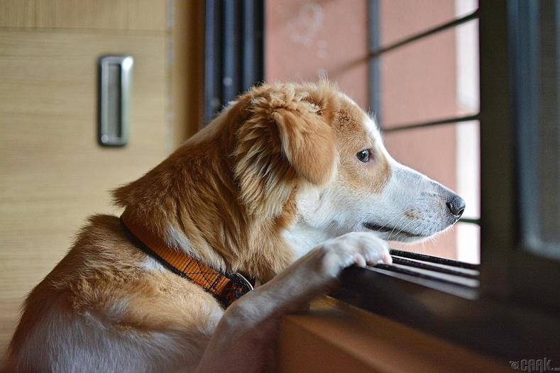 Бид бодохдоо: Нохой юмсыг хар цагаанаар хардаг