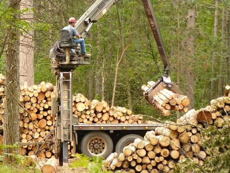 Мод бэлтгэл
