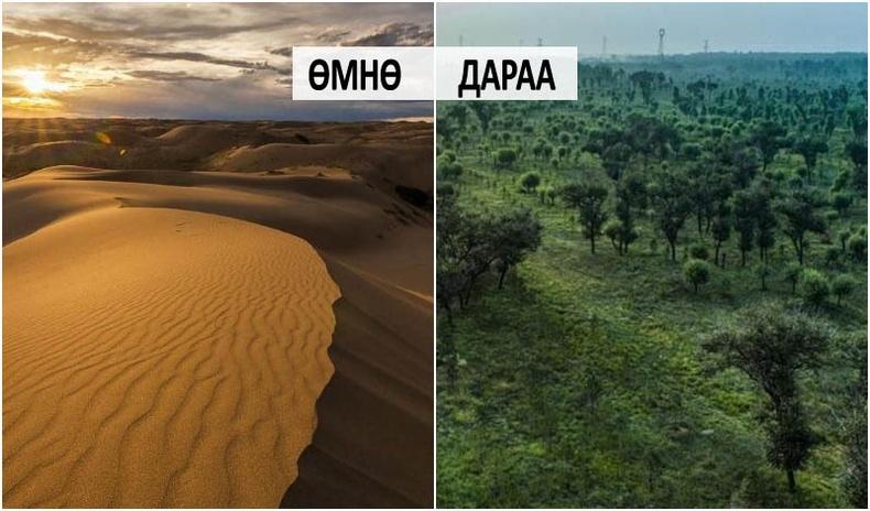 Өвөр Монголын хамгийн том цөлийг 60 жилийн дотор ой болгосон түүх