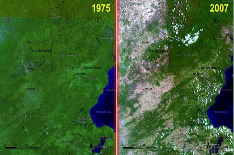 Гватемалын ойн сан ингэж хорогджээ