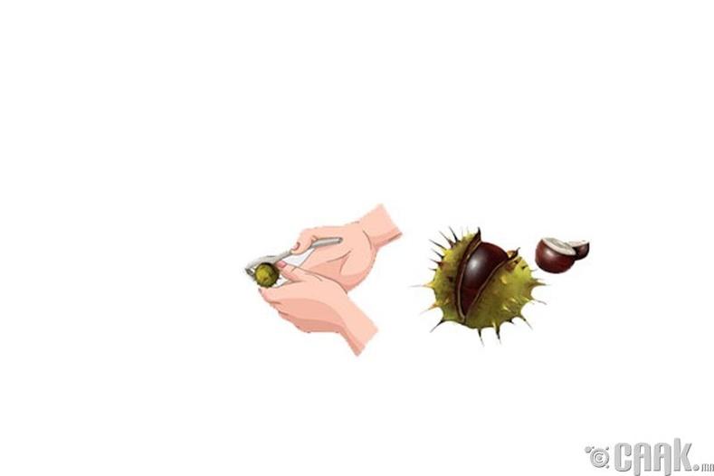 Туулайн бөөр жимс
