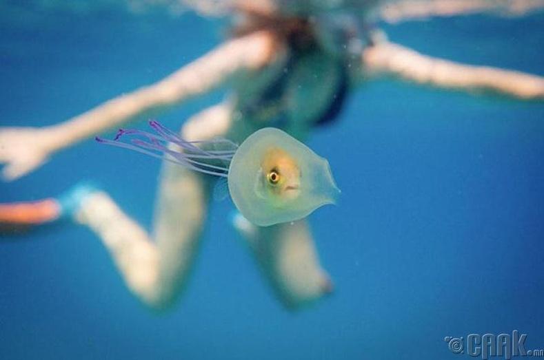 Далайн мөгөөрст амьдаараа залгиулсан загас