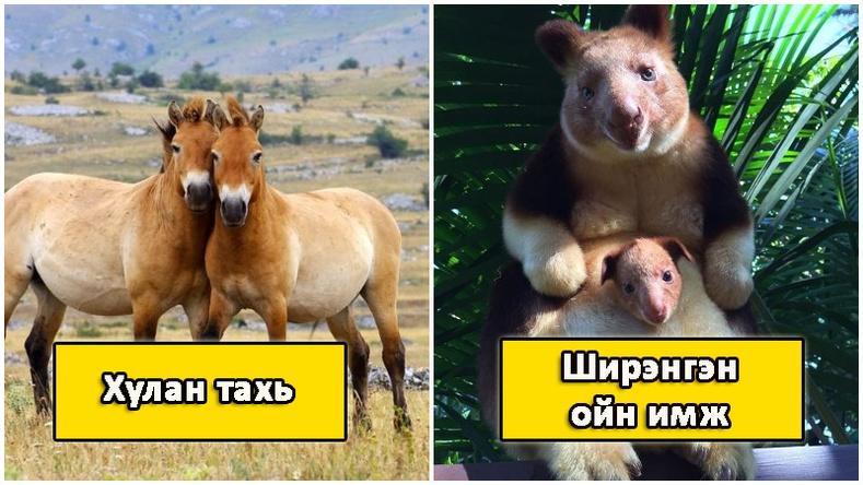 Хүмүүсийн бараг мэддэггүй, маш ховор амьтад (2-р хэсэг)