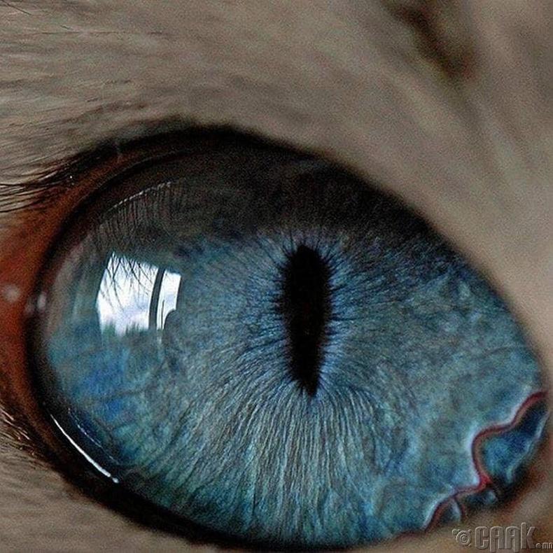 Муур хүнээс 8 дахин сайн хардаг
