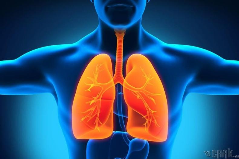 Хүний уушиг- 312,000 доллар