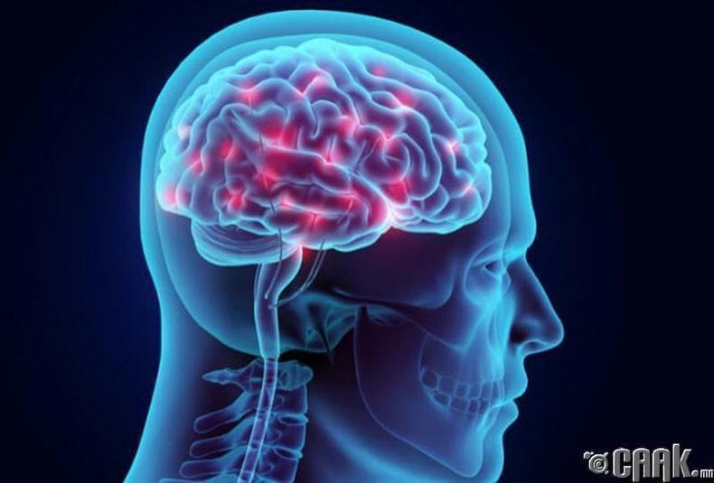 Хүний тархи