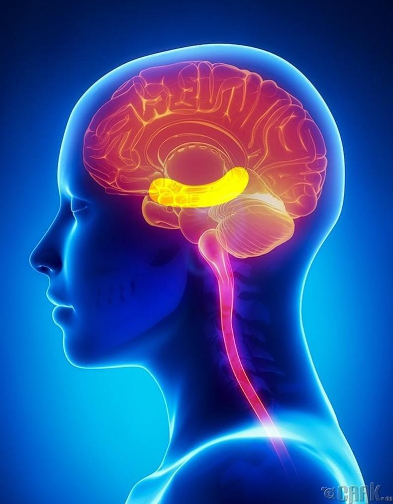 Тархины үйл ажиллагааг сайжруулна
