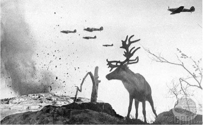 Зөвлөлтийг бөмбөгдөж буй Германы онгоцнууд - 1941 он