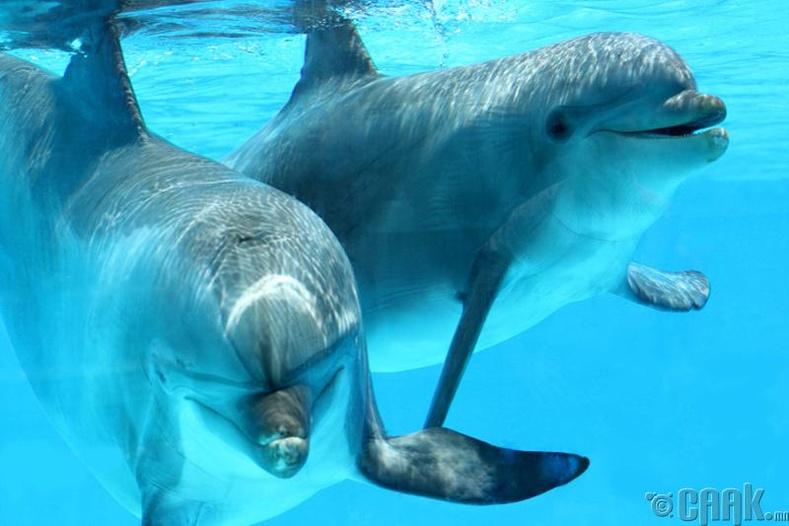 Делфинүүд өөрсдийн гэсэн хэлтэйгээс гадна нэг нэгнээ хочилж дууддаг