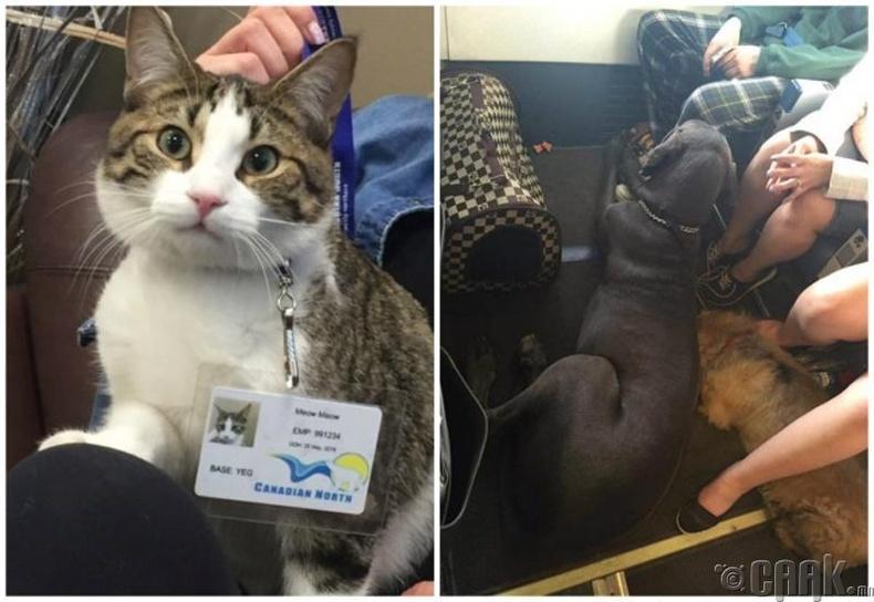 Амьтдыг галаас аварсан эрийн гайхалтай түүх
