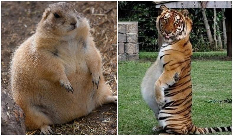 Амьтны ертөнц дэх ээжүүдийн өхөөрдөм зургууд (30 фото)
