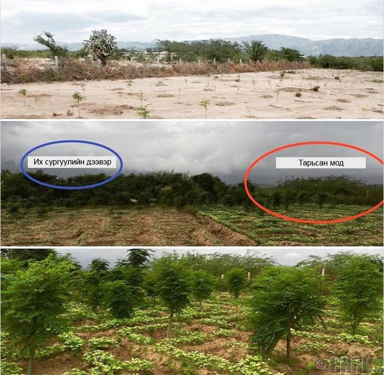 Гайтигийн их сургууллийн шинээр суулгасан ой