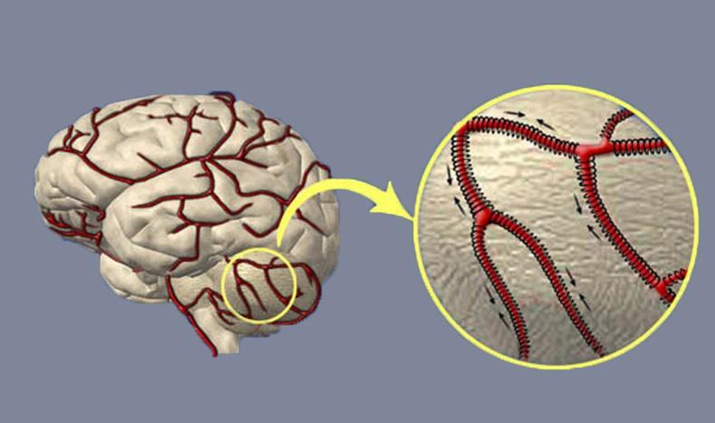 Тархины судасны хатууралтай тэмцэх үр дүнтэй аргууд
