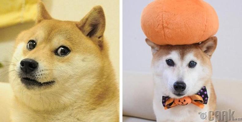 Доге (Doge)