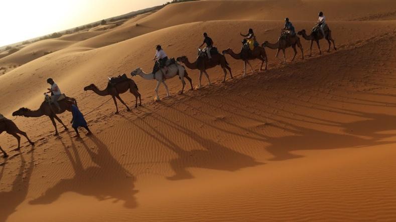 Францын тэмээ