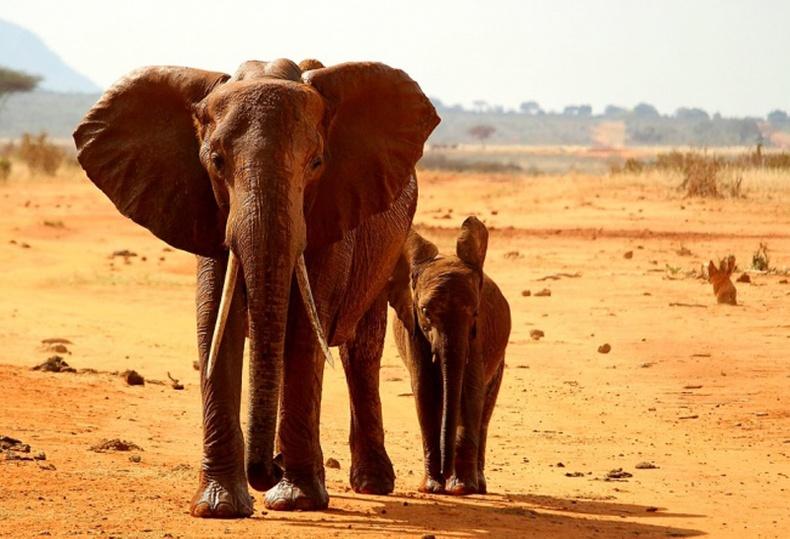 Африкт зэрлэг амьтад л амьдардаг