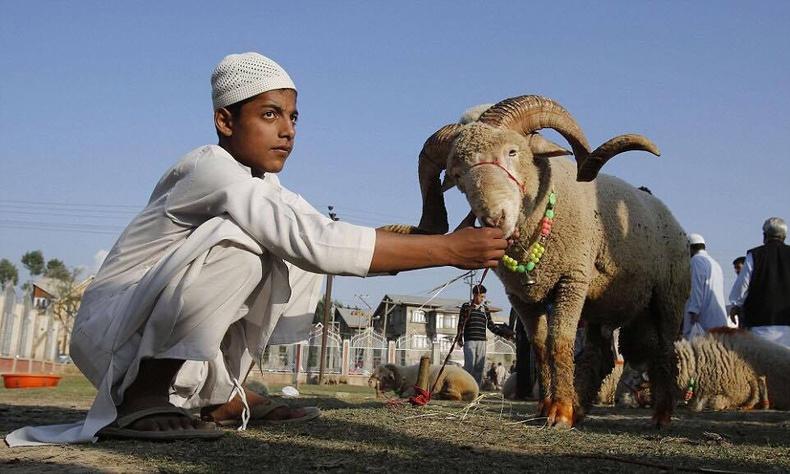 """Исламын шашинтнуудын """"халал"""", еврейчүүдийн """"кошер"""" хооллолт гэж юуг хэлдэг вэ?"""
