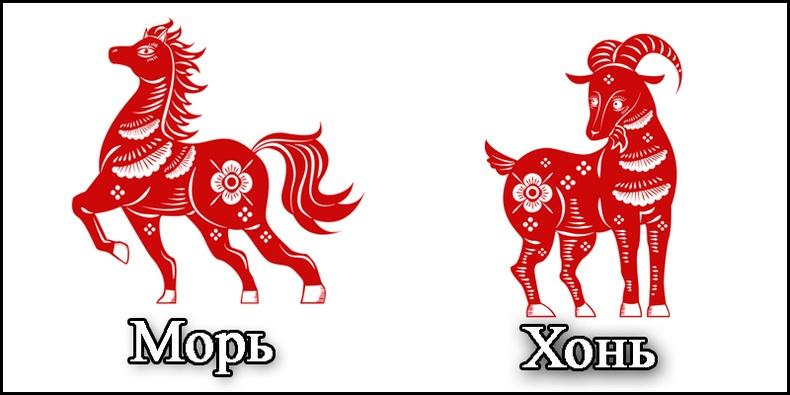 Морь, Хонь жилтний 2019 оны ерөнхий зурлага