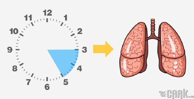 Уушги (03.00-05.00)