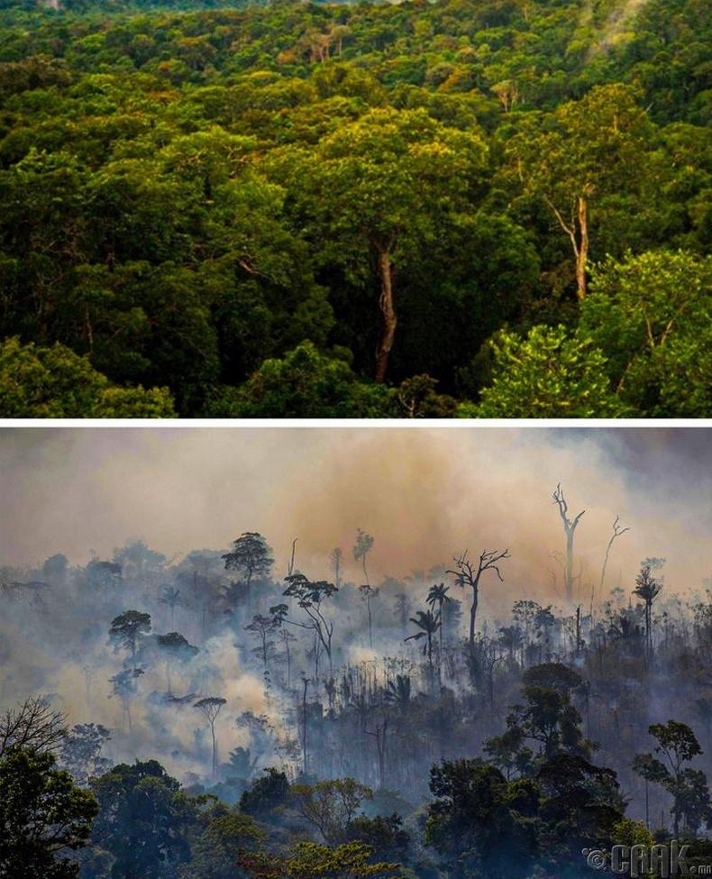 Амазоны ойн түймэр