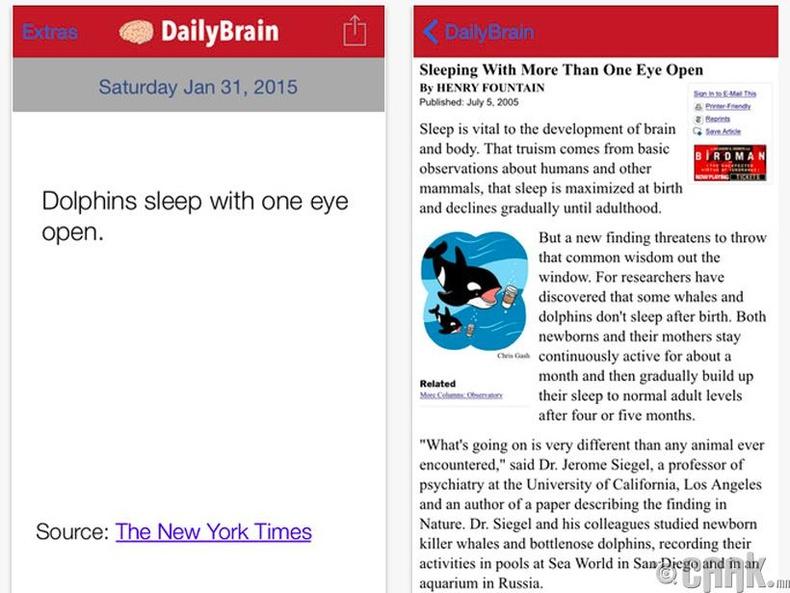 """DailyBrain"""