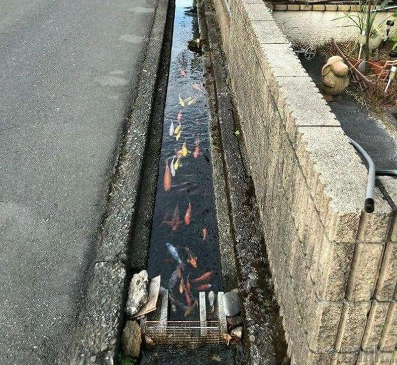 Борооны ус зайлуулагч нь загас амьдарч болохоор цэвэр байдаг